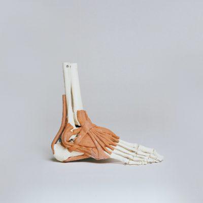 Formation en échographie musculo-squelettique